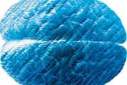 Blue-brain-Pastel-221x184