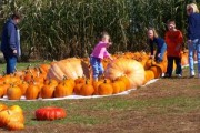pumpkin-patch2-600x400-300x200