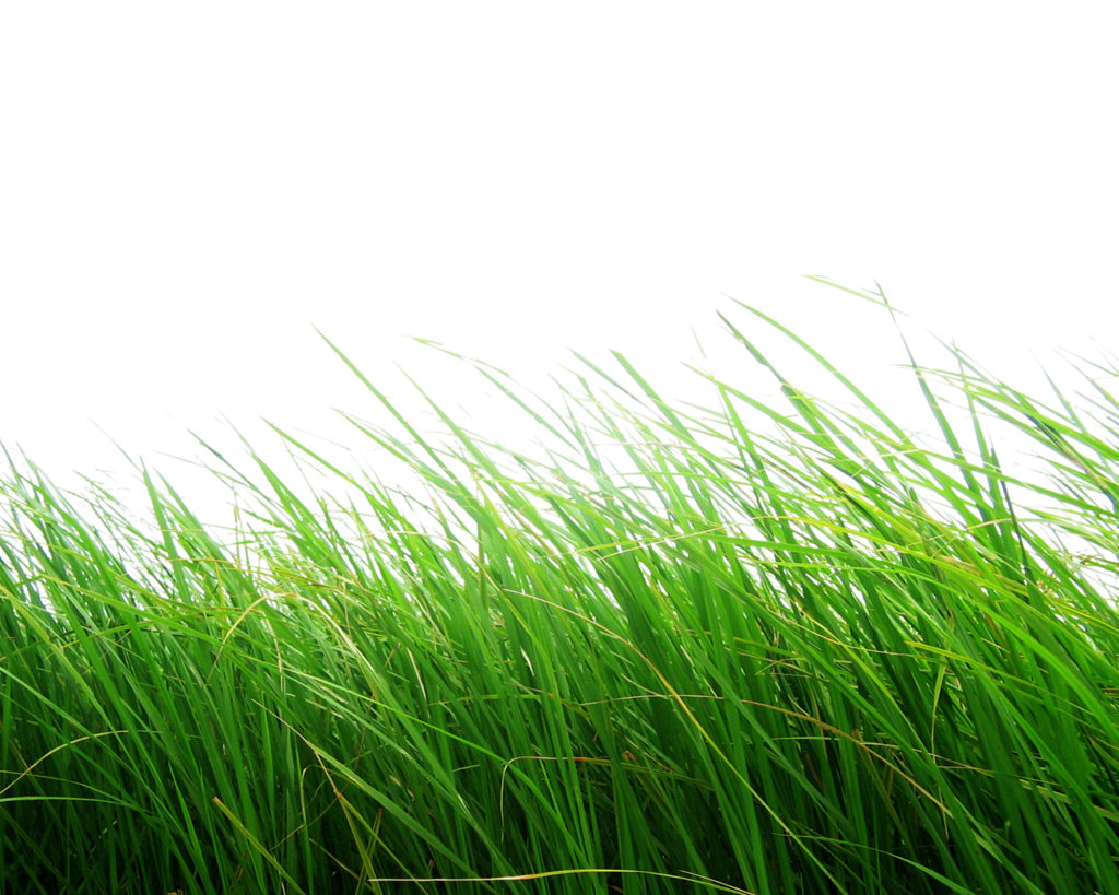 png_grass_by_moonglowlilly-d5z1o5t
