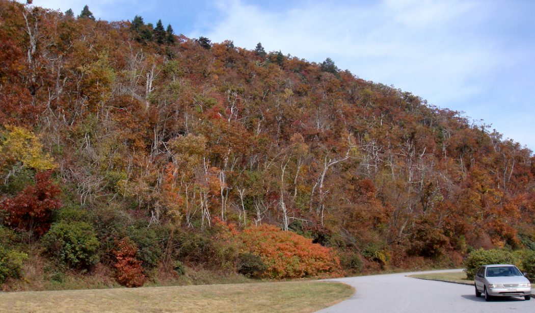 Keep The Blue Ridge Parkway Open