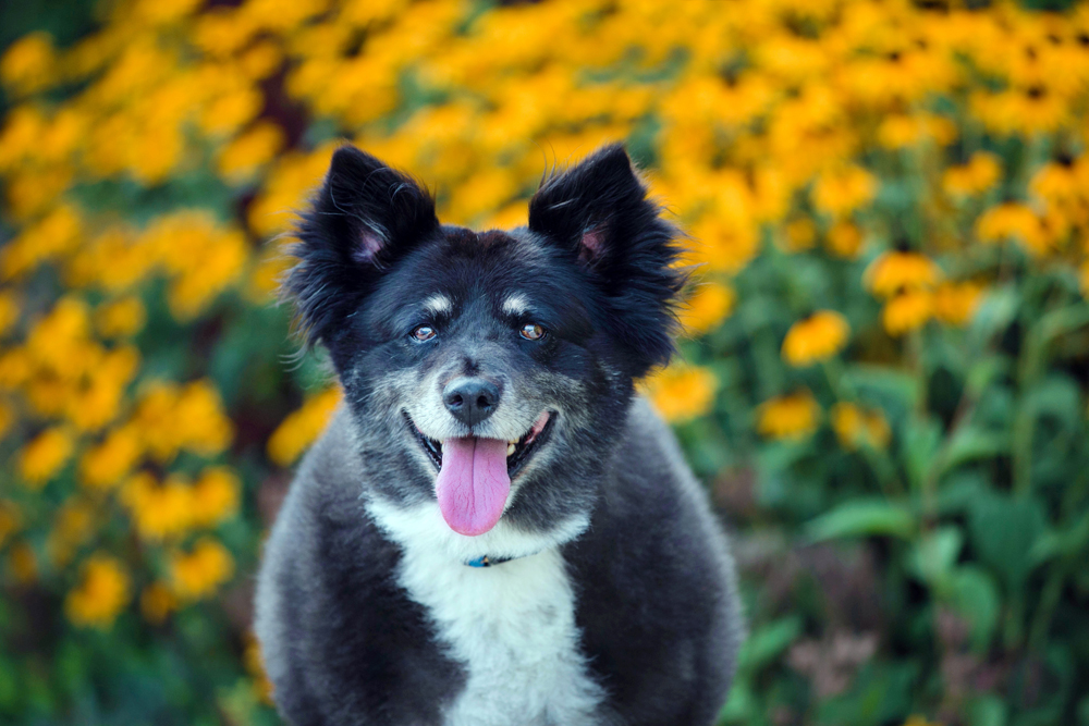 Adoptable Pet of the Week: Rocky