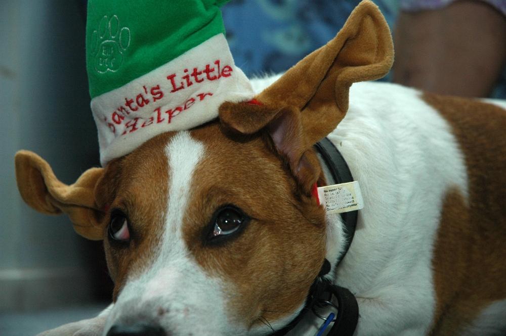 dog wearing a santa hat