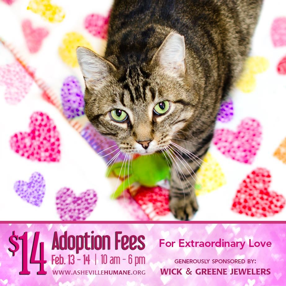 14 dollar adoption fees