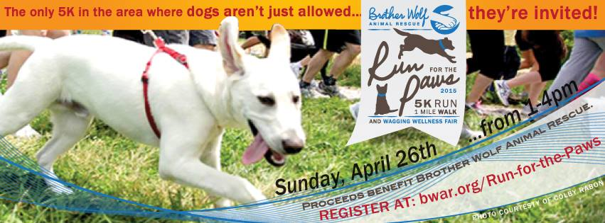 Run for the Paws 2015
