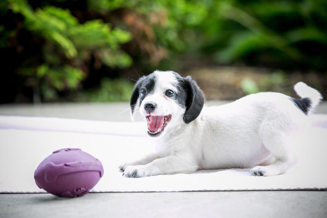 Bella Puppy Bowl