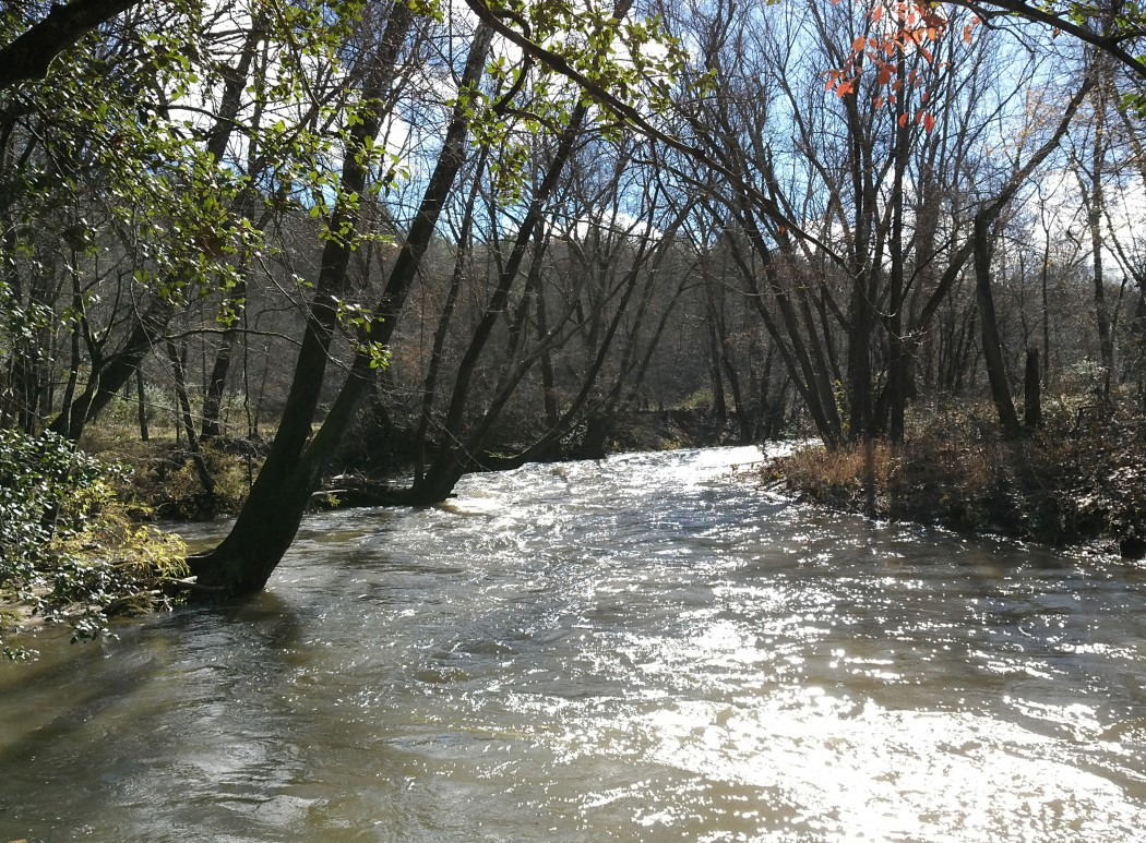 Foothills Conservancy