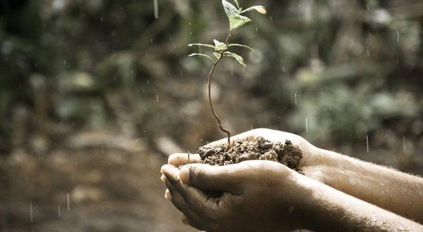 leaf endowment fund