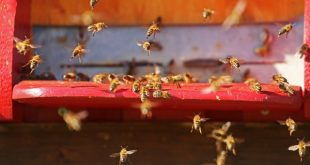 Bee City USA Asheville Program Now Led By Asheville GreenWorks