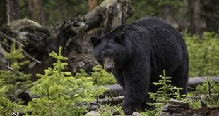 Brews and Bears May 11 @ WNC Nature Center