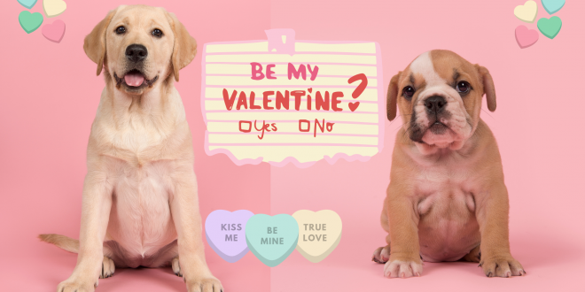 valentine's day puppygram