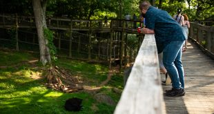 Brews and Bears at the WNC Nature Center is Back Just in Time for Summer